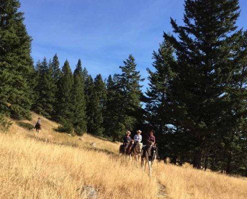 guest ranch vacations, riding through grass, trail riding