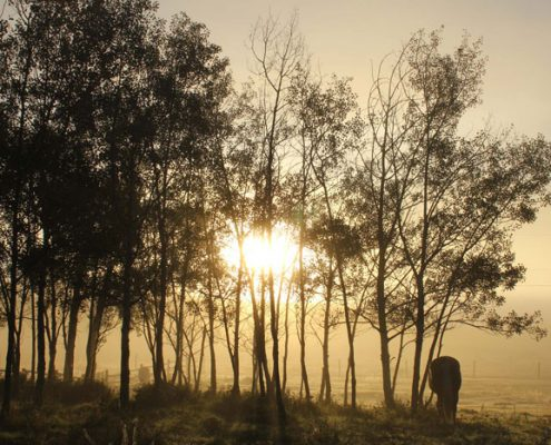 guest ranch vacations, horse sunrise