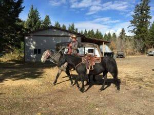 Bernadette und pferde trainung