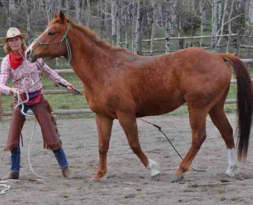 Natural Horsemanship Introduction Travi