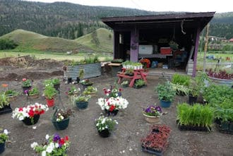 Stage Left Ranch Nursery